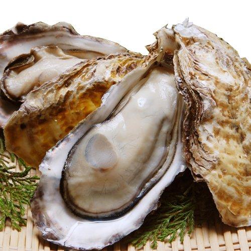ギフト おのみち発 広島県産 冷凍牡蠣(かき)ハーフシェル特大サイズ10個入り×1袋 業務用 カキ 魚介類 鍋セット