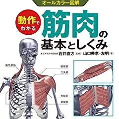 動作でわかる筋肉の基本としくみ