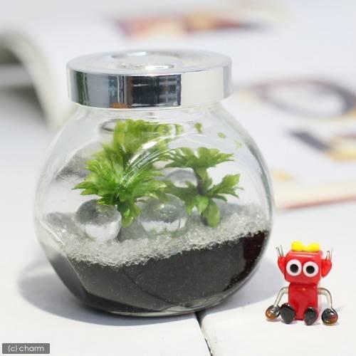 charm(チャーム) (観葉植物/苔) 私の小さなテラリウム ~オオカサゴケ~(クリア)(1セット)(説明書付)
