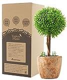 フェイクグリーン 光触媒 お世話のいらない 癒しの グリーン 観葉植物 インテリア 人工観葉植物 TMプライム トピアリー ボール