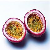 オリジナル包装パッションフルーツ種子オーガニックパッションフルーツ種子栄養トケイソウガーデンフルーツ種子 - 40個