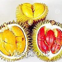 シーズパッケージ:5個:フルーツ のドリアンの種の種子レア種子盆栽おいしい王