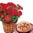 母の日ギフト カーネーション鉢花とスイーツセット 5号鉢 花とスイーツ (あか)