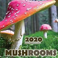Mushrooms 2020 Mini Wall Calendar