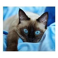 猫目5dダイヤモンドDIYペイントクラフトキットホームデコレーションフルドリルブルー