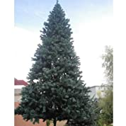 全国の商業施設でご使用頂いている業務用。【人工植物】 スタンドタイプ 大型 クリスマスツリー 6m【smtb-s】 グリーン
