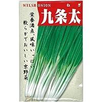 ネギ 種 【 九条太 】 種子 小袋(約15ml)