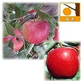 リンゴ2種セット:ふじ(富士)と津軽(つがる)[受粉セット][苗木] ノーブランド品