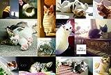 オリーブ特別編集 猫にぞっこん。 (マガジンハウスムック) 画像
