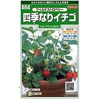 【種子】四季なりイチゴ 小袋