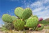 csfoto 7x 5ft背景クローズアップDesert Cactus写真用背景幕Tenacious Cactus ThornグリーンPlantブルースカイホワイトクラウド夏ホットHolidayハワイアンツアーフォトスタジオ小道具ポリエステル壁紙