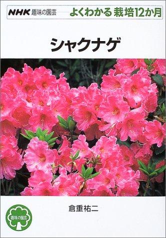 シャクナゲ (NHK趣味の園芸 よくわかる栽培12か月)
