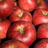 秋映(あきばえ) Bランク (マル特) 約 3kg (9玉~12玉) 長野県産りんご トミおじさんのりんご
