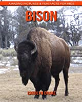 Bison: Amazing Pictures & Fun Facts for Kids