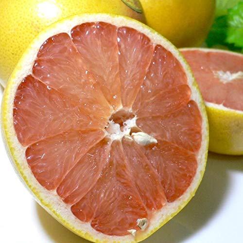 アメリカ・フロリダ産 完熟グレープフルーツ (ゴールデンクラウン)赤果肉 大玉12個入