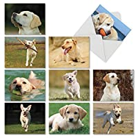 Lovable Labs : 10Assorted空白すべての行事Notecards featuring Loyal子犬Answering彼らのマスターのコール、封筒付き。am6325ocb-b1X 10