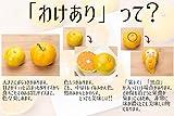 和歌山 みかん 高糖度 で 最高級 の 味 (訳あり) 産地直送 送料無料 (3キロ) のし対応致します