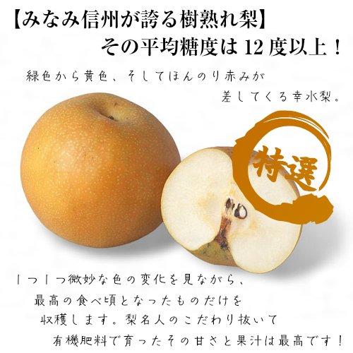 【果汁滴る爽やかな果実】幸水 梨 秀品 10kg箱 太鼓判