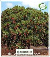 SEEDフルーツ種子広東甘いライチライチ果実ジューシー種子ベストフルーツ種子種子キッチンガーデン種子パックシード(パケットあたり5)