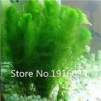 イエロー:スーパーディール!水族館の草の種(水草ランダム)水生植物の草の種家族簡単な植物の種-100個