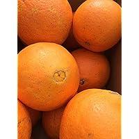 和歌山県産 ネーブル オレンジ 10㌔ Sサイズ