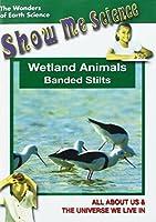 Wetland Animals - Banded Stilts [DVD]