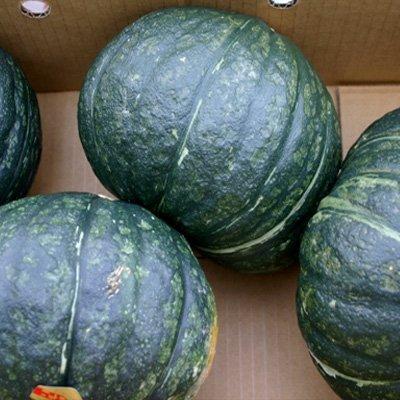 かぼちゃ 北海道 特大 1箱10kg(4-5玉入)
