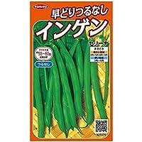 サカタのタネ 実咲野菜7075 早どりつるなしインゲン セリーナ 00927075