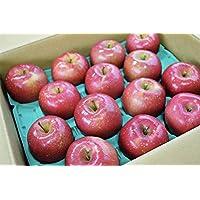 長野産ふじ ご自宅用リンゴ 10kg