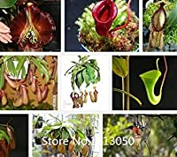 Promotion 100 seeds/pack Cheap Bonsai Nepenthes flower seeds eating mosquito varieties of seed plants mixed Novel Seed