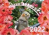 【Amazon.co.jp 限定】オカメインコ鳥写真カレンダー2022 (B6サイズ。ワンタッチで卓上にも壁掛けにもなる3Wayカレンダー)