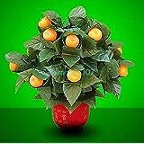 15 Blooming Oranges - Remote Control / 15ブルーミングオレンジ - リモートコントロール -- ステージマジック