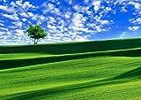 A3サイズミニポスター 丘と一本の木