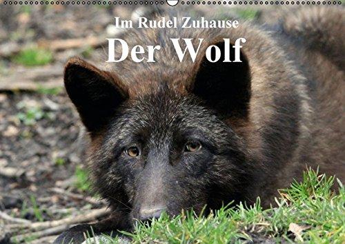 Im Rudel Zuhause - Der Wolf (Wandkalender 2017 DIN A2 quer): Der Wolf erobert auch wieder Deutschland (Monatskalender, 14 Seiten)