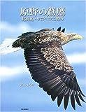 原野の鷲鷹―北海道・サロベツに舞う