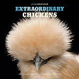 Extraordinary Chickens 2019 Calendar