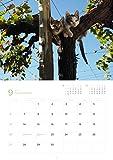 岩合光昭福ねこカレンダー 2020 ([カレンダー]) 画像