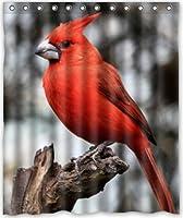"""60"""" x72""""インチ冬Cardinal鳥シャワーカーテン新しい防水ポリエステル生地風呂カーテン(シャワーリング付属"""