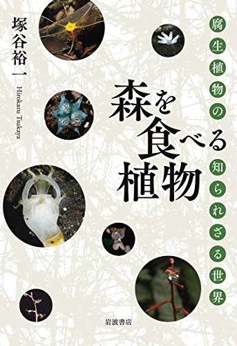 森を食べる植物——腐生植物の知られざる世界
