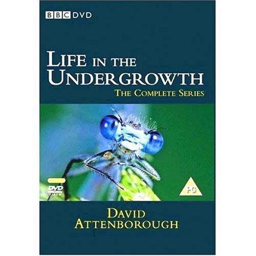 BBC ライフ・イン・ザ・アンダーグロウス / 昆虫の世界 DVD-BOX (245分) Life in the Undergrowth [DVD] [Import]