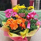 季節の鉢植え 寄せ鉢ギフトL 3から5種類の鉢花や観葉植物をかごにおまかせアレンジ