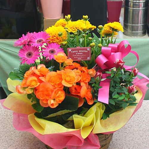 季節の鉢植え 寄せ鉢ギフトL 3から5種類の鉢花や観葉植物をか...