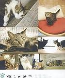 猫カフェ 画像