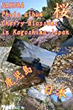 SAKURA Cherry Blossoms in Kagoshima-JAPAN (English Edition)