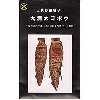 大浦太ゴボウ 在来種固定種伝統野菜のタネ