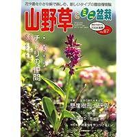 山野草とミニ盆栽 2008年 05月号 [雑誌]