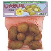 じゃがいも(馬鈴薯) シンシア 種芋 1kg
