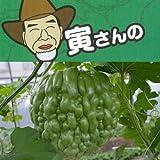 寅さんのアップルゴーヤ(緑秀)3号ポット 2株セット[食べて美味しい、緑のカーテン!] ノーブランド品
