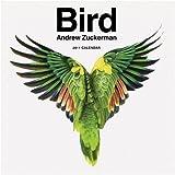 2011 Wall Calendar: Bird