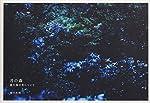 月の森―屋久島の光について